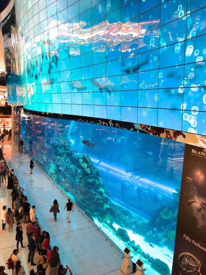 Dubai - mall aquarium
