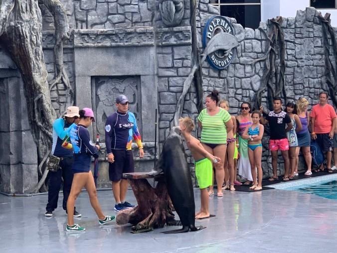 Cozumel - chankannab park seal show
