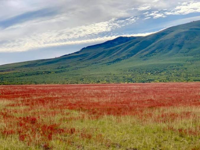 Patagonia - lago argentino1