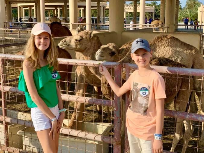 bahrain - camel farm