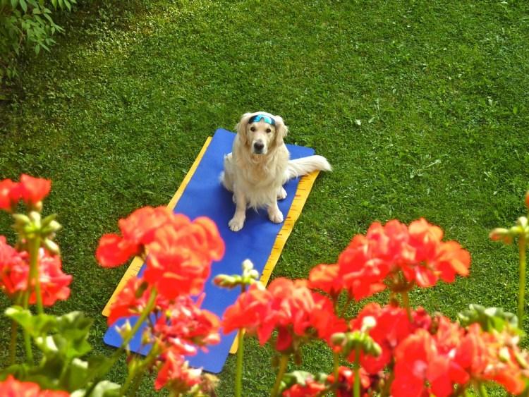 Frodo in giardino nella StubaiTal
