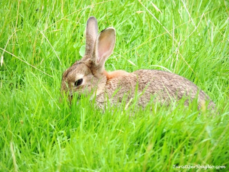E finalmente lui: Peter Rabbit