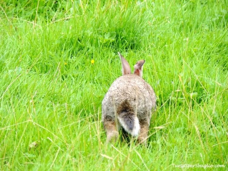 Peter Rabbit accoglie i turisti in visita - 2_new