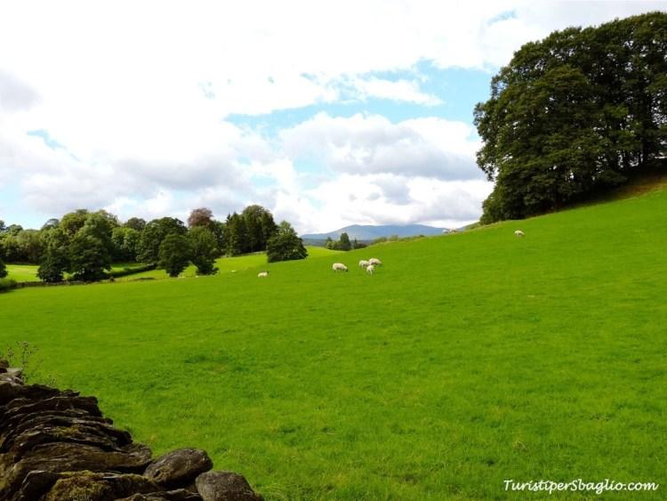 Sulle tracce di Beatrix Potter - Lake District strada per Hill Top - 09_new