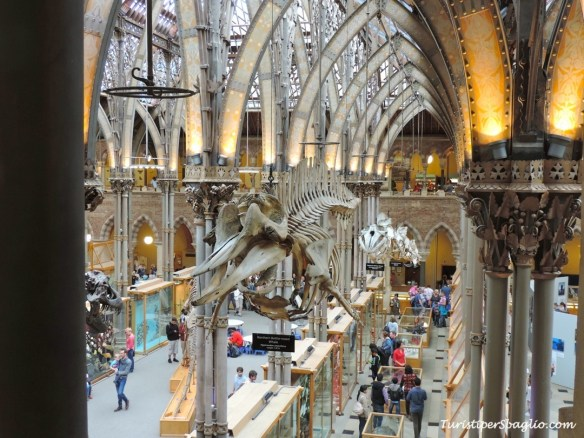 UK 2014 - Oxford - Museum of Natural History - 28_new