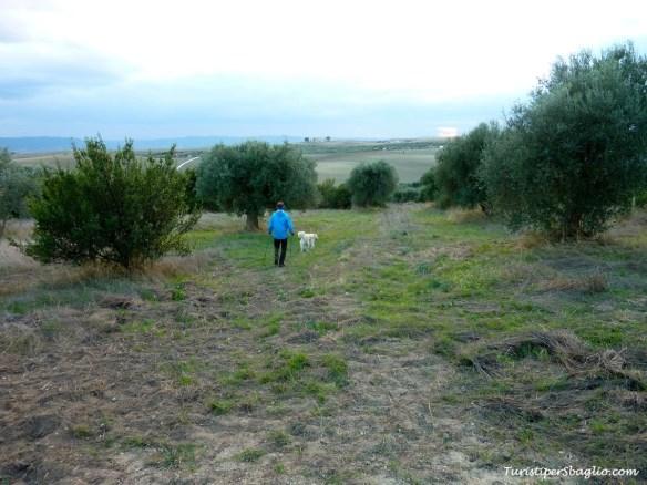 Alla ricerca del sentiero fra gli ulivi