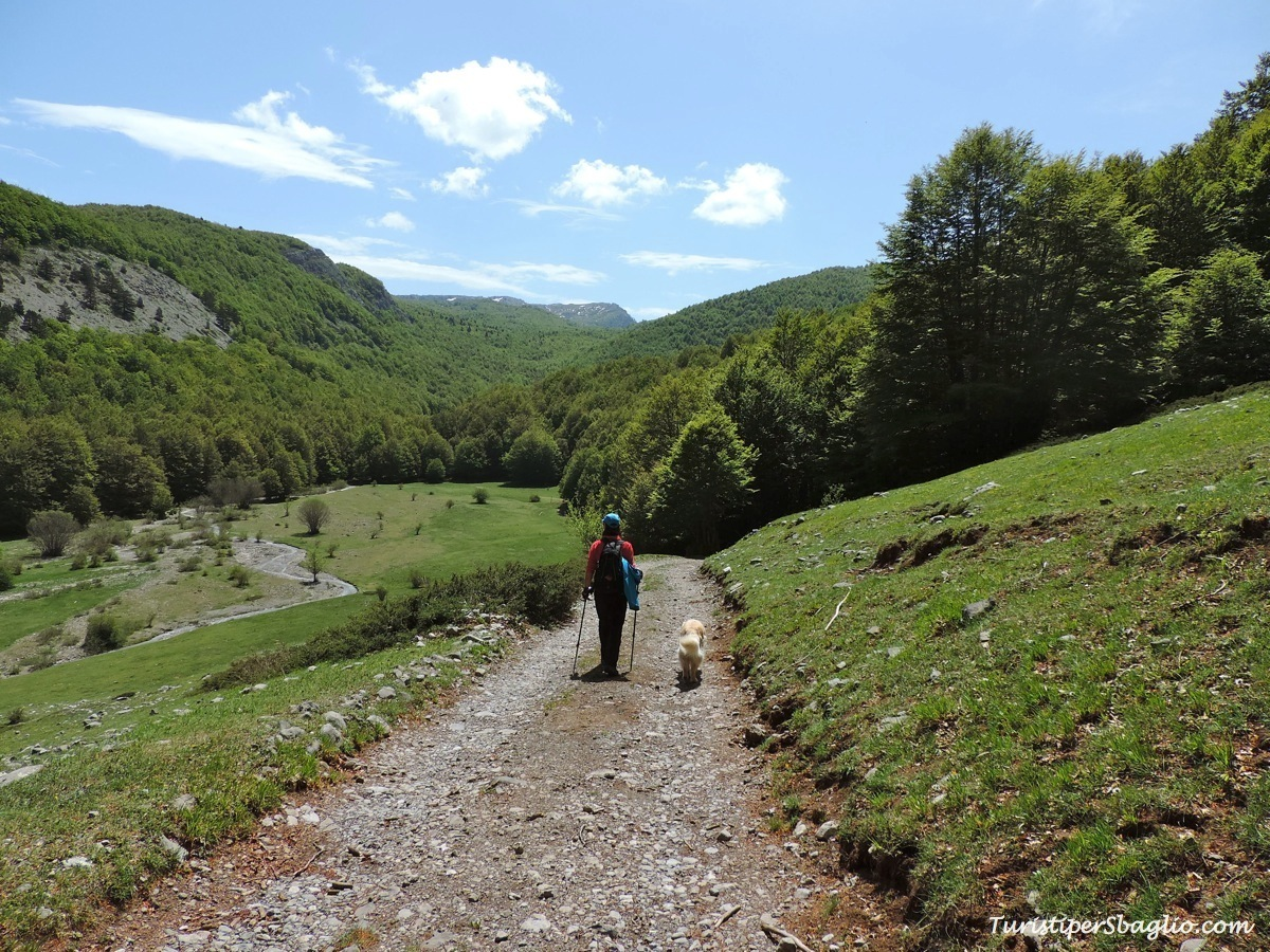 Nel Parco Nazionale del #Pollino: la Grande Porta ed il Pino Loricato