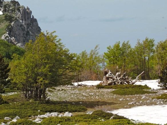 Parco Nazionale del Pollino - 22