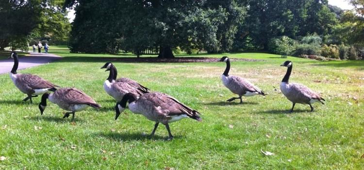 Londra, Kew Gardens, la Tree Tops Walk, una passeggiata tra gli alberi e tutto quel che ne consegue…