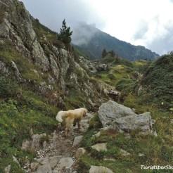 Escursione al lago di Crozet, Grenoble - 006