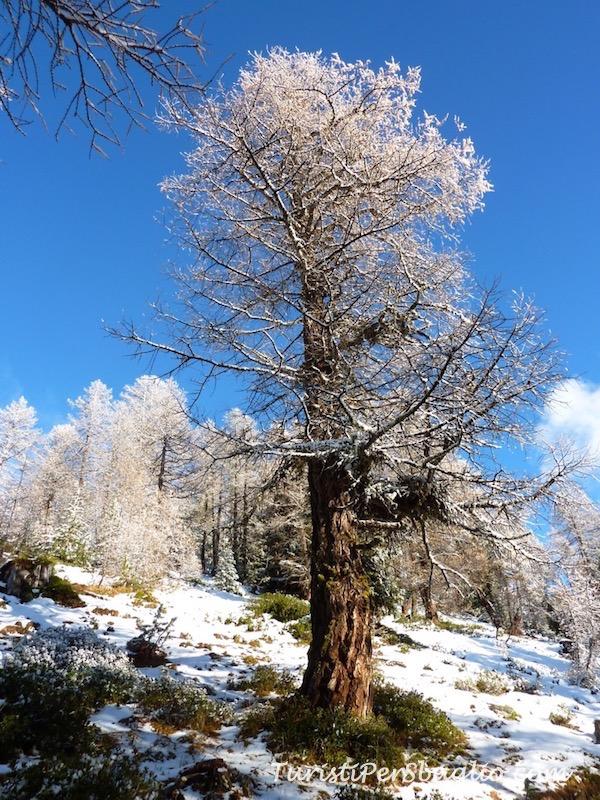 chandolin-svizzera-vallese-sentiero-per-le-ciaspole-13_new
