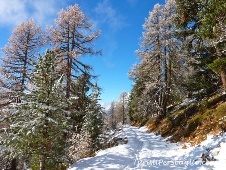 chandolin-svizzera-vallese-sentiero-per-le-ciaspole_new