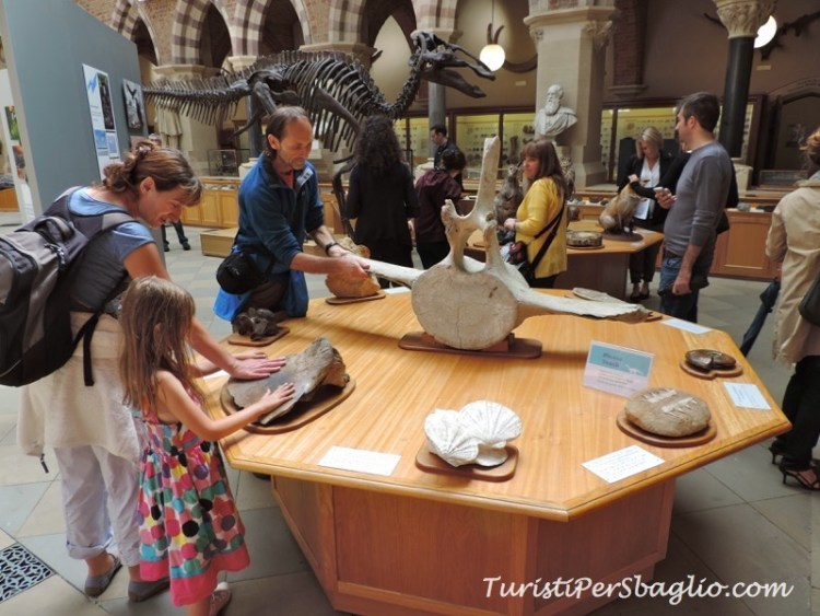 UK 2014 - Oxford - Museum of Natural History - 14