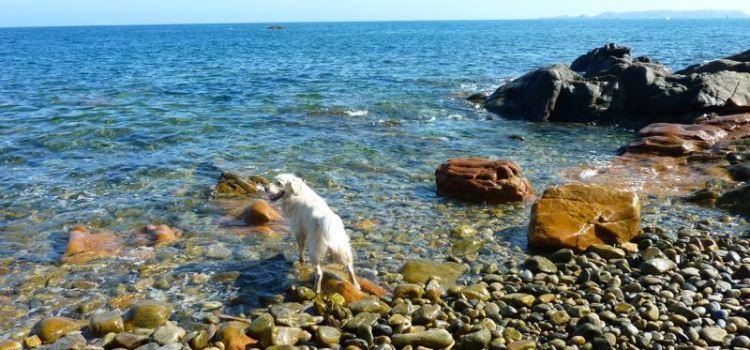 Da La Clarté a Ploumanac'h un trekking nella costa di Granito Rosa, Bretagna