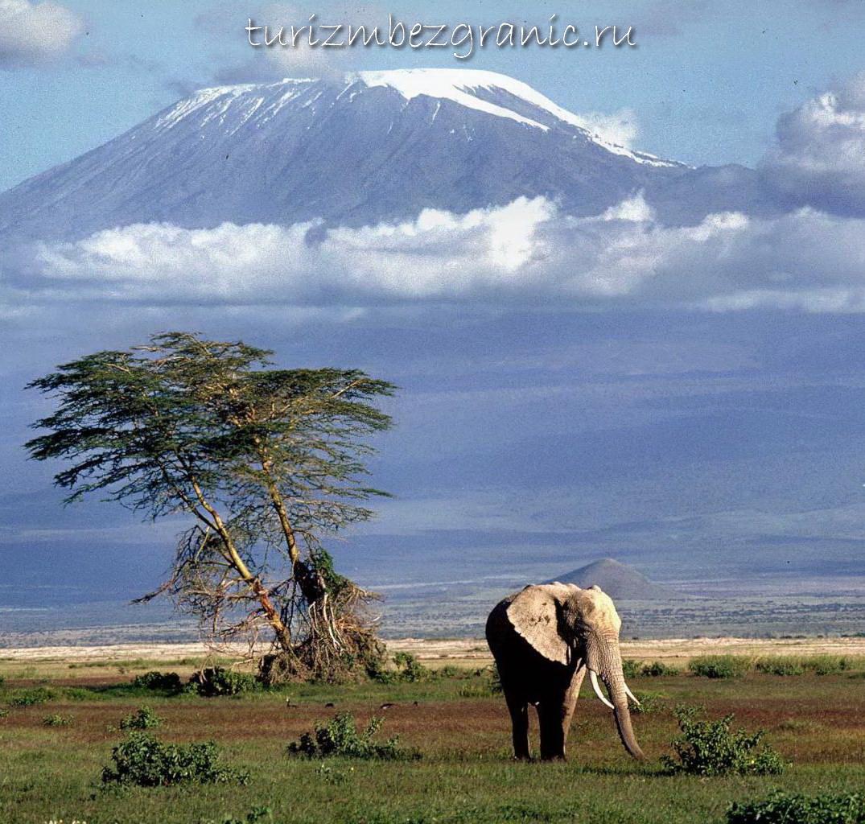 pierde greutatea kilimanjaro