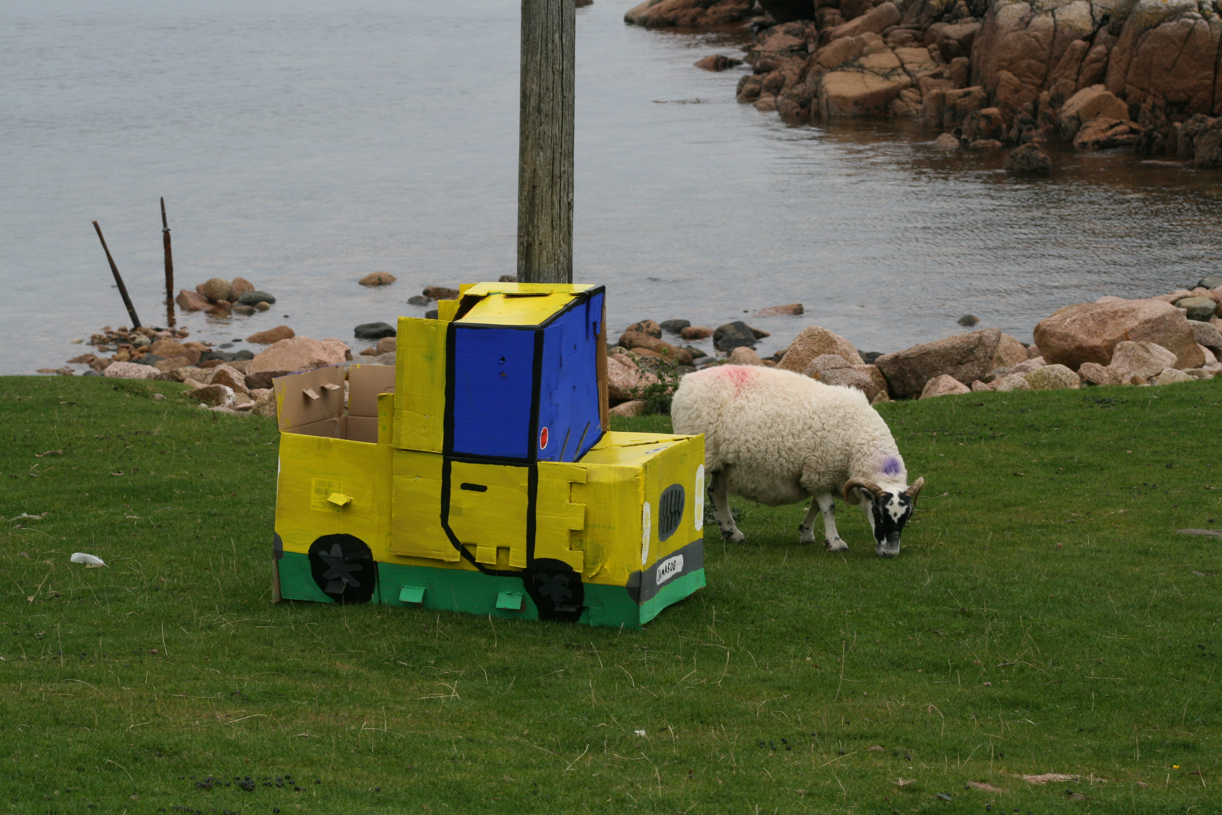 Ferocious patiently waits on the front lawn so the sheep will get used to him.