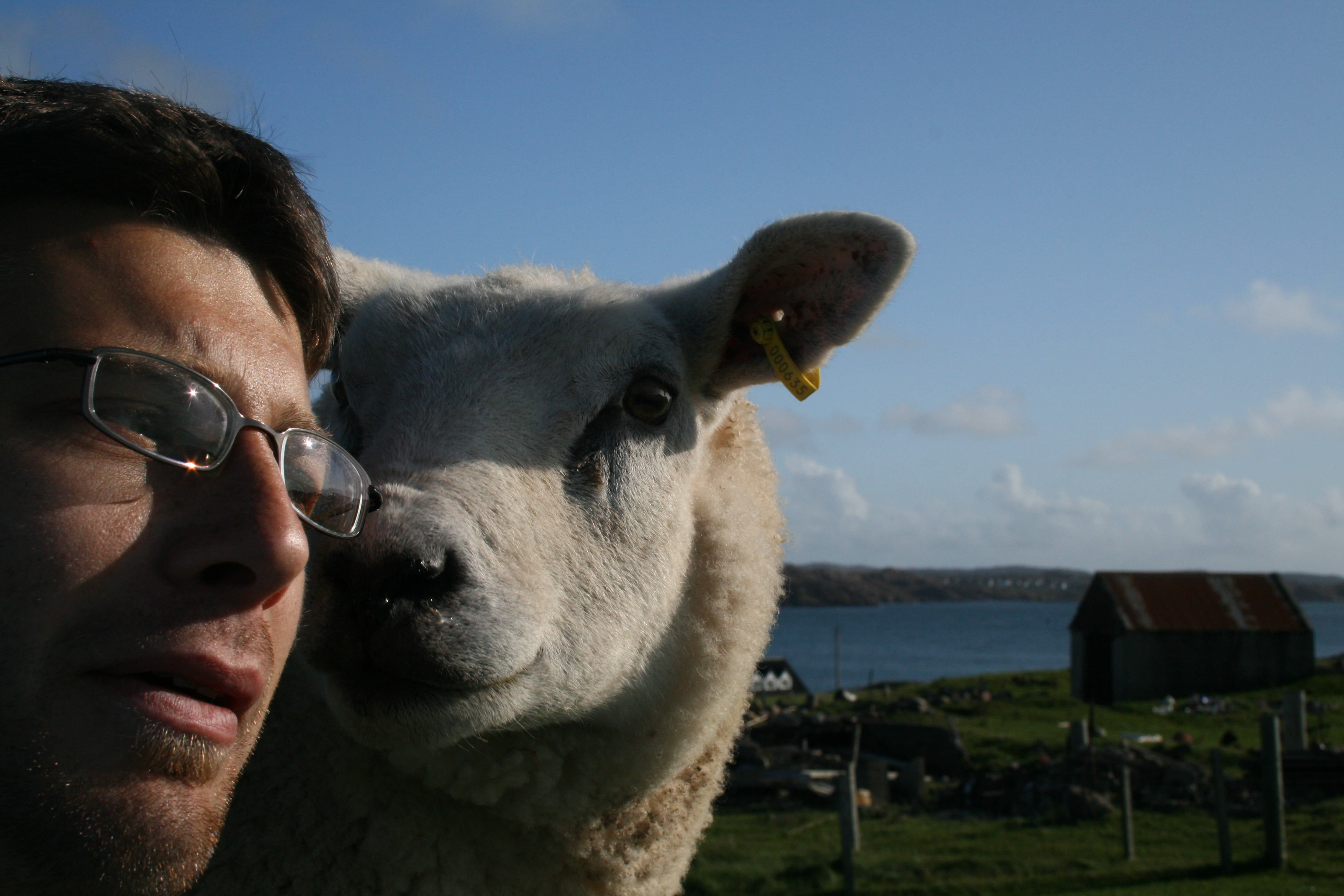 I was scared that this sheep was going to rip my head off.
