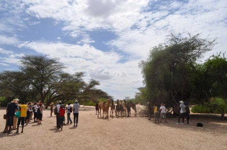 TBI students and staff take notes as Maitan's camels eye them warily.