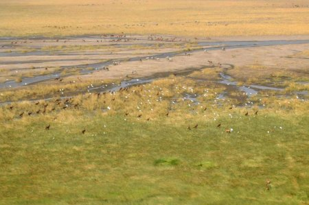 Sibiloi Park on the east side of Lake Turkana is home to many reebok, hippo, zebra, crocodiles and diverse flocks of birds.
