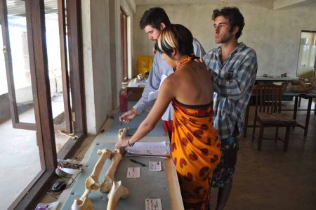 Patrick, Priscilla and Wyatt examine a series of long bones laid out in the TBI lab.
