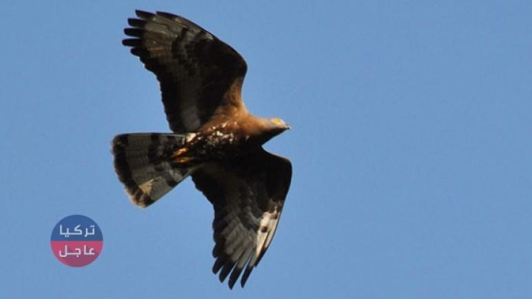 إياك أن تصطاد هذا الطير في تركيا وإليك ماحدث لمواطن في هاتاي
