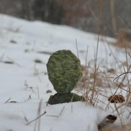 2014 snow 17