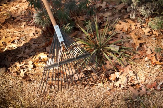 mulching leaves