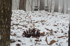 2014 snow 19