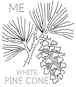 turkey feathers: MAINE: White Pine Cone & Tassel