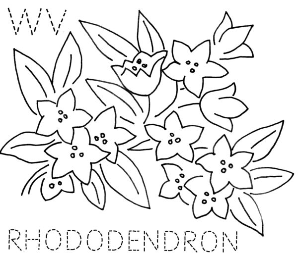 turkey feathers: WEST VIRGINIA--Rhododendron