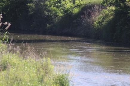 Loup River