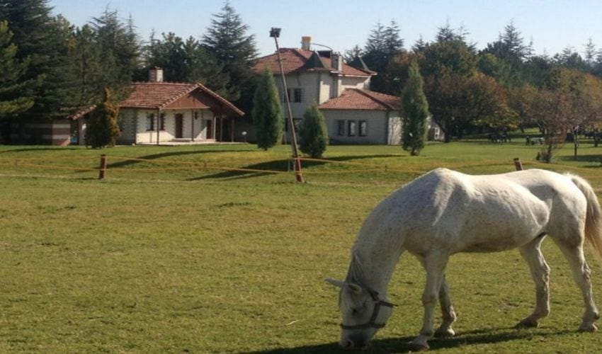 تربية الخيول في تركيا اسكي شهير