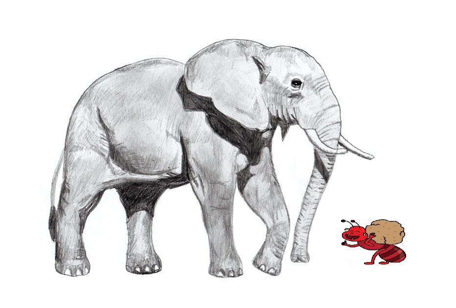 BANCUL ZILEI – Furnicile și elefantul
