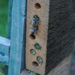 homemade bee houses with bee active