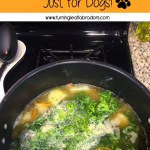 Bone Broth for Dogs, the Benefits and a Recipe!