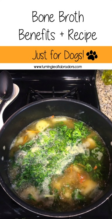 bone broth for dogs recipe | turning leaf labs