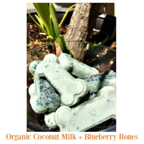 Organic Coconut Milk + Blueberry Bones | Frozen Dog Treats