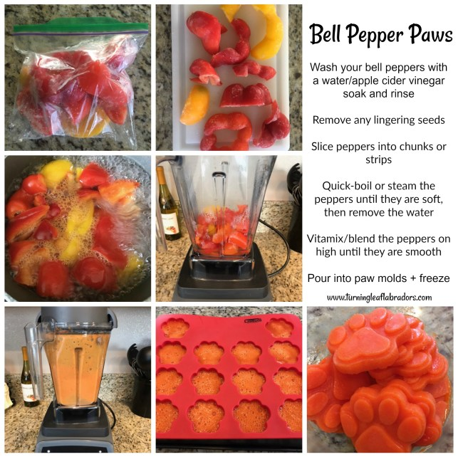 bell pepper paws | turning leaf labradors