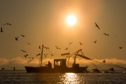 Fishermen Trawl Alabama's Mobile Bay