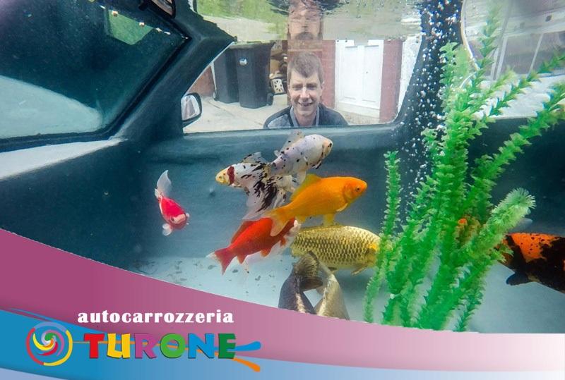 acquario auto