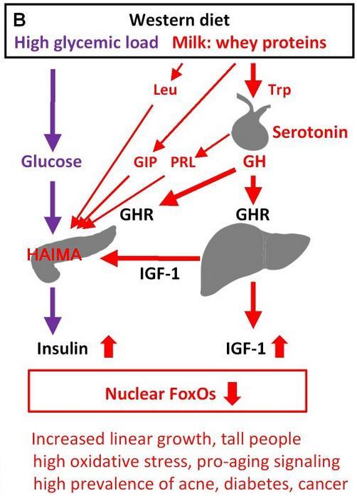 insuliiniresistenssi_45