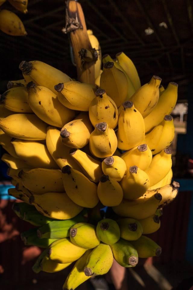 Beste bananene som finnes, er i Cuba!