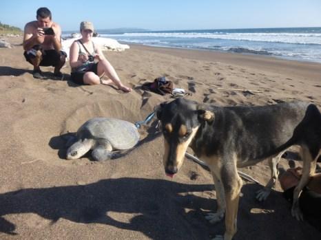 Zuri and the turtle