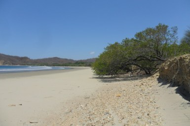 there is still some native beachfront vegetation...