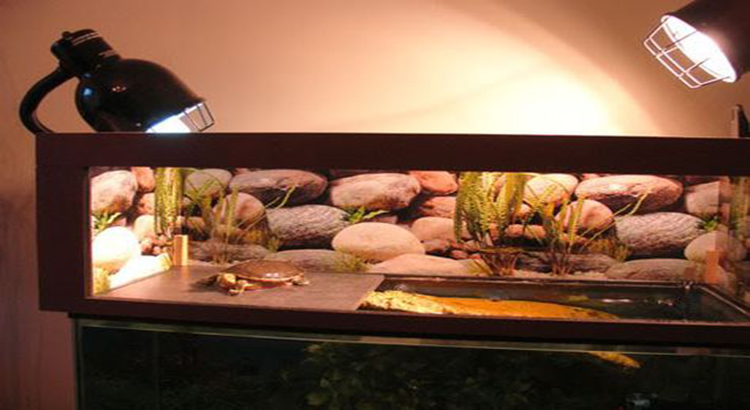 heating a turtle tank and basking area