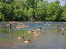 April- Flying Fishing on the Chattahoochie River, Atlanta, Georgia