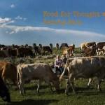 david-hagerman-robyn-eckhardt-and-cows-van-turkey-june-2014Page
