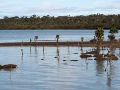 Jacks Beach Mangroves