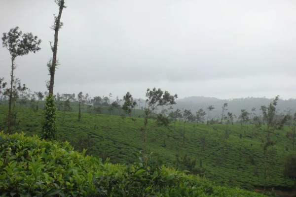 Coorg - India