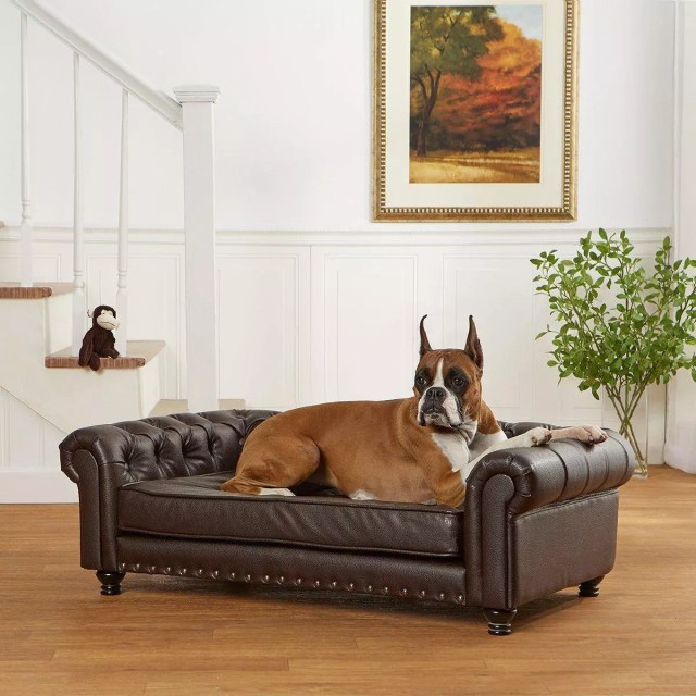 Big dog on the leather sofa